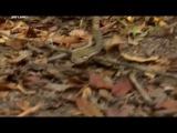 4 of 8 - / Стив Ирвин. В защиту дикой природы / Steve Irwin's. Wildlife Warriors / 2011